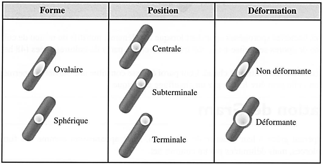 Classification spores