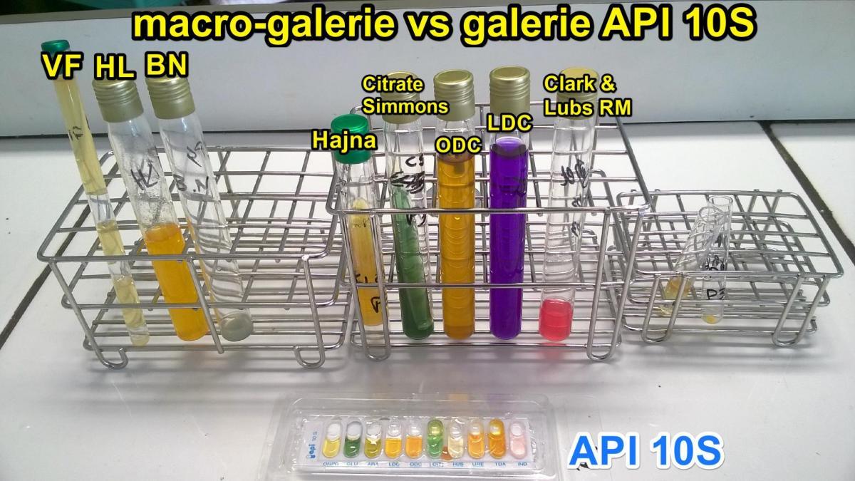 Comparaison macrogalerie vs api10s e coli