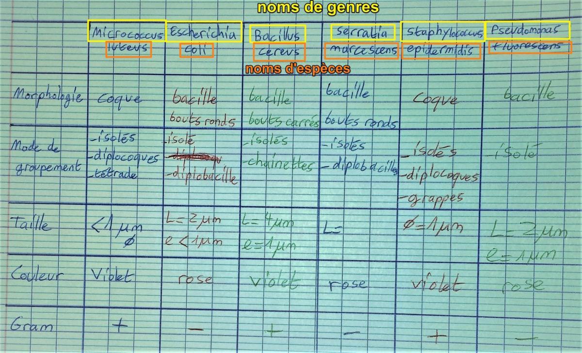Comparaisons gram especes