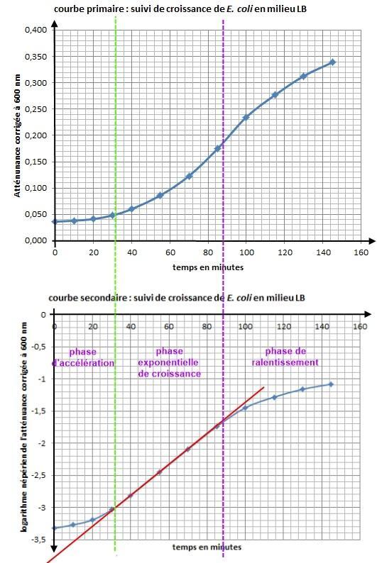 Croissance e coli milieu lb