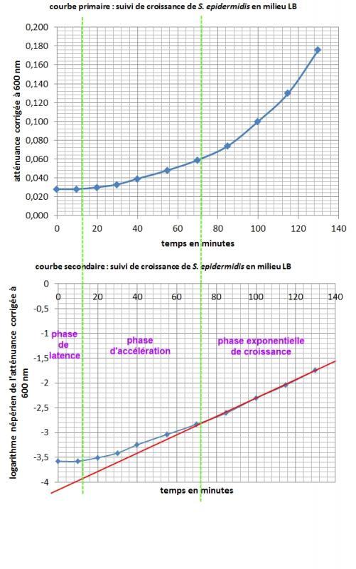 Croissance s epidermidis en milieu lb 2