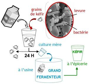 Fabrication kefir