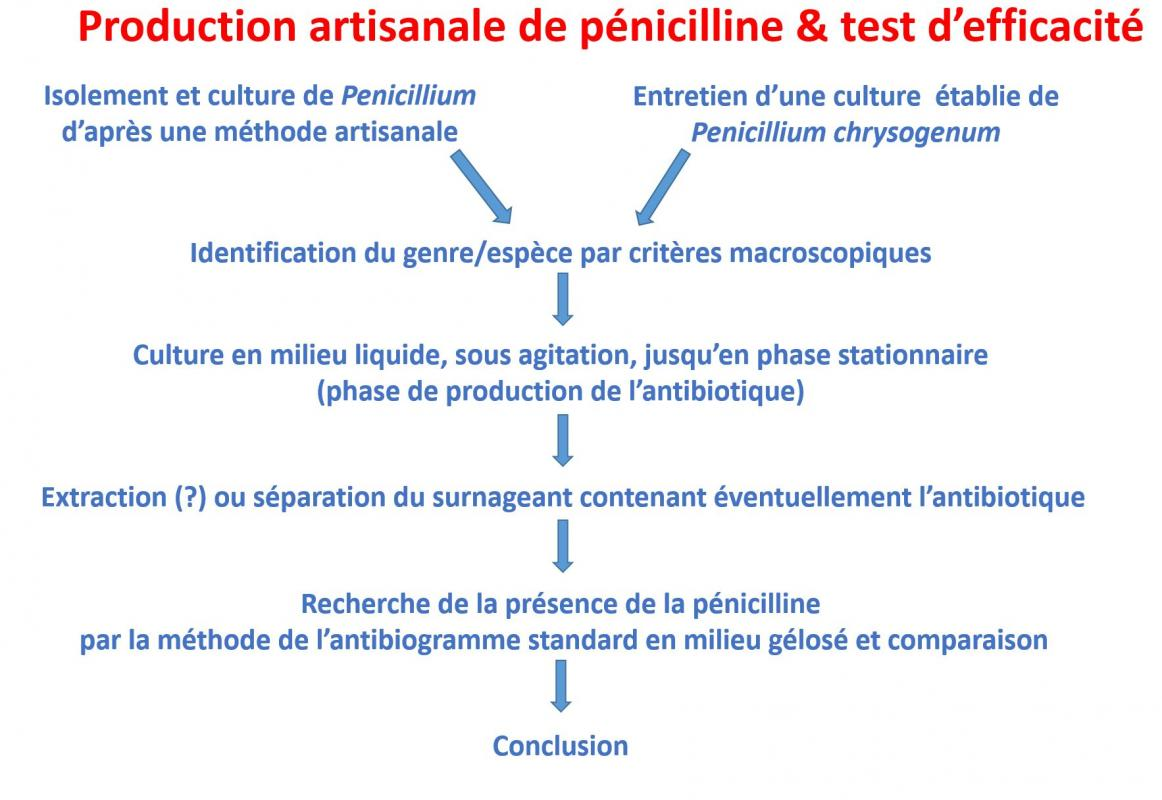 G1 penicilline ppt synthese prof