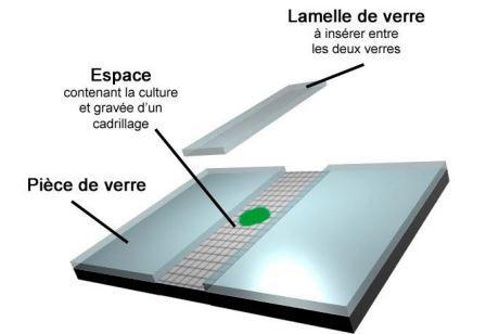 Image 3d hematimetre