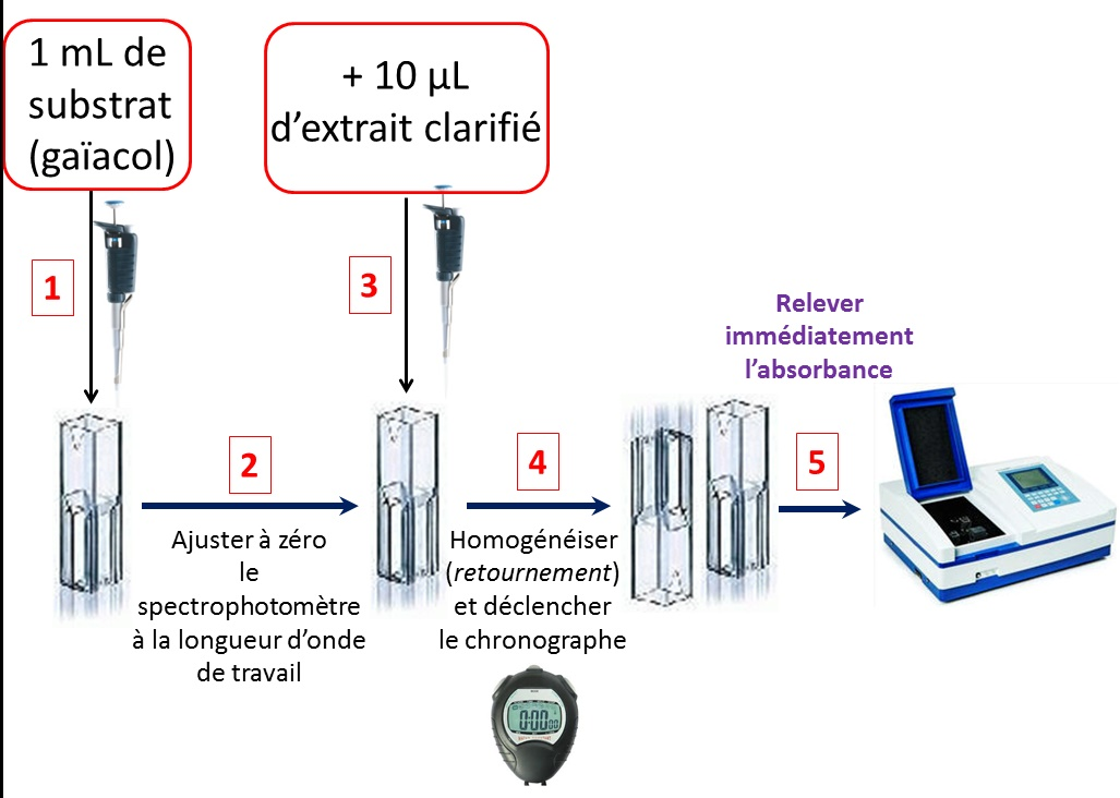 Mesure activite enzymatique pod 1
