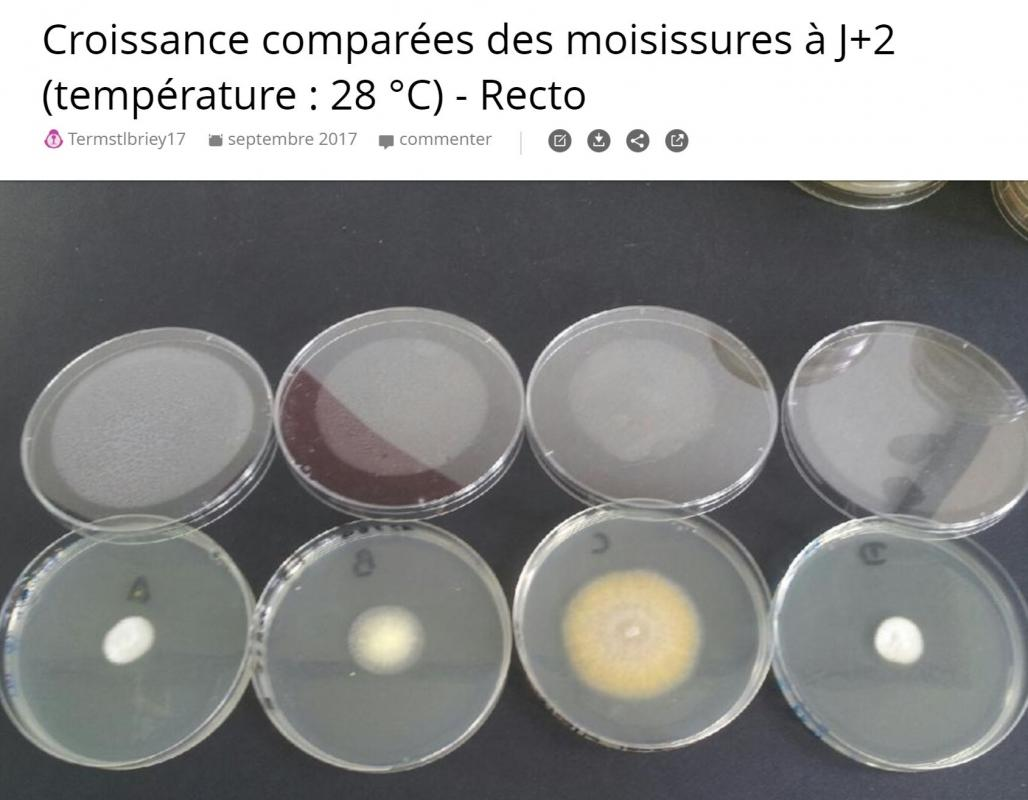 Moisissures j2 recto