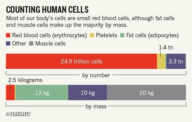 Nature human cells 8 01 16 v2