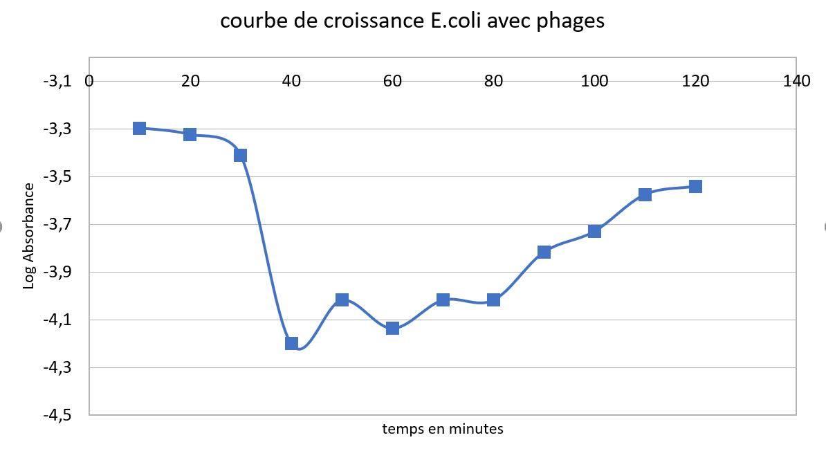 Phage croissance coli et phage