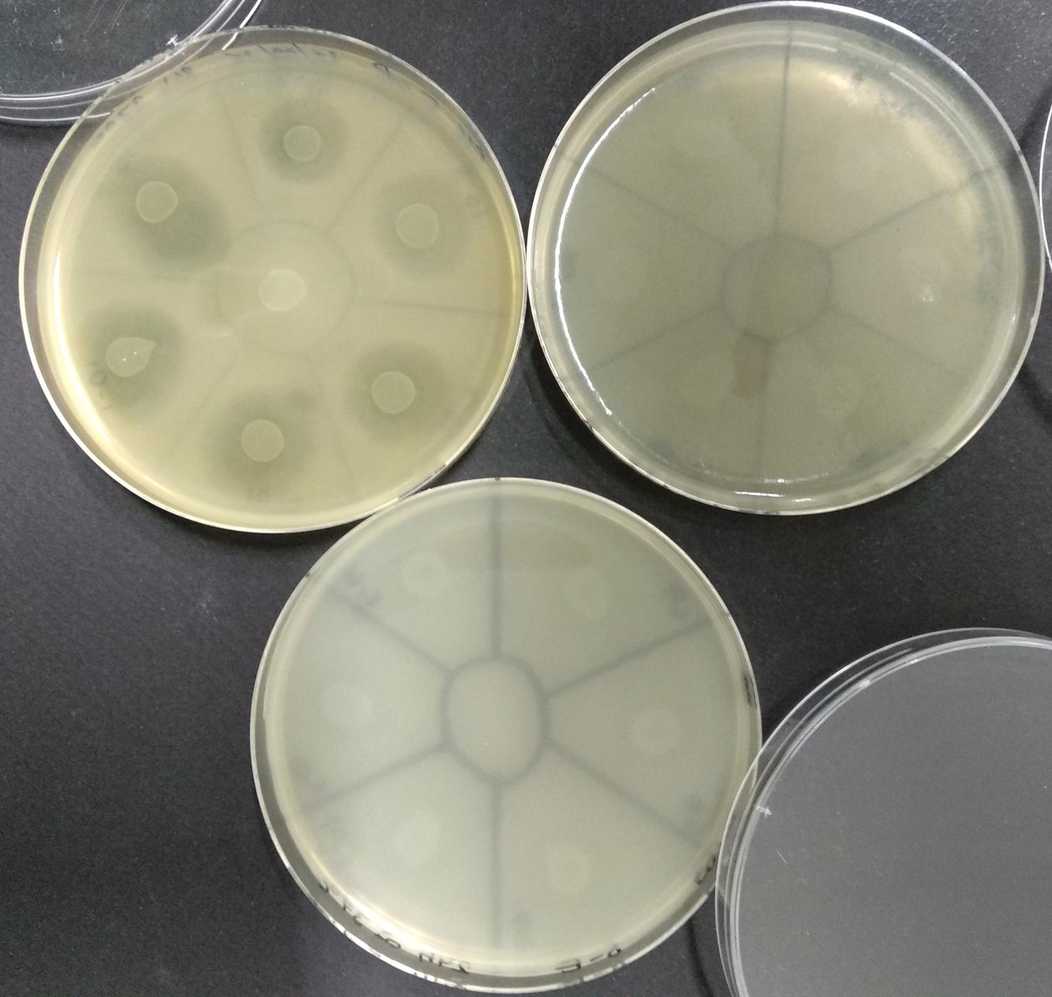 Phages 2018 1b