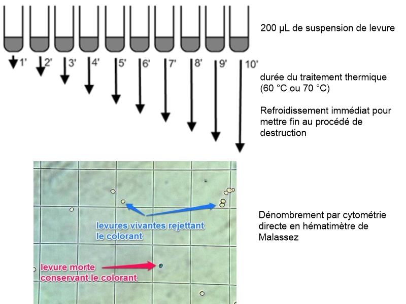 Plan etude destruction thermique