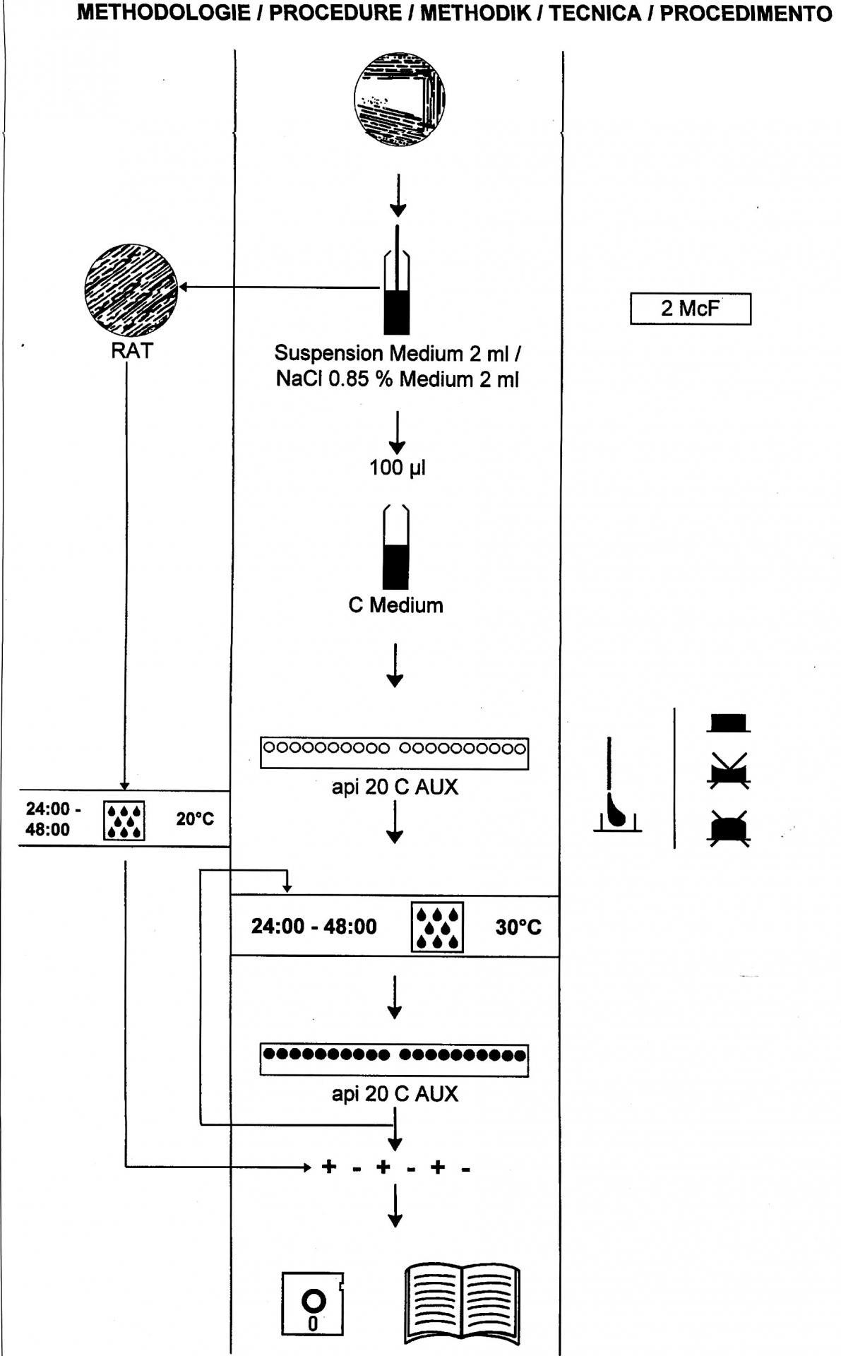 protocole api 20 c aux - Coloration De Gram Protocole