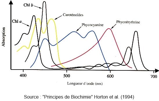 On souhaite doser la concentration de la chlorophylle b au sein d'un mélange de pigments. On choisit de mesurer à :
