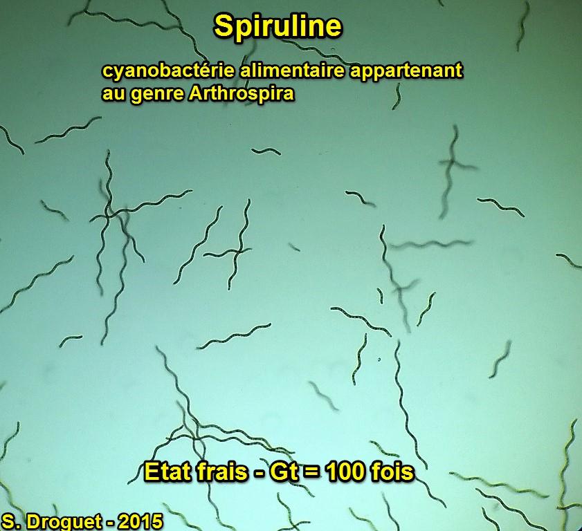 Spirulina arthospira gt 100 fois